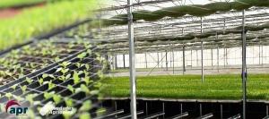Cultivos en Invernadero: INVERNADEROS SEMILLEROS