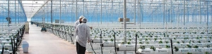 Novedades Agricolas install a greenhouse over 10 Has. in Turkey