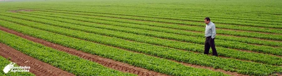 Irrigation Or Fertigation For The Crop?