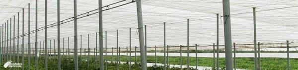 HUMIFITO Phytosanitary Humidifier System for Greenhouses