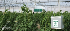 4 Preguntas Frecuentes sobre el Control del Clima en Invernaderos