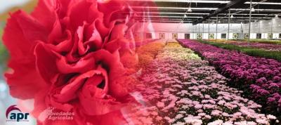 Cultivos en Invernadero: INVERNADEROS DE FLORES