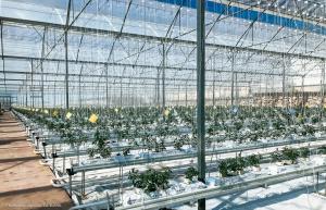Nuevo Proyecto de Invernaderos para el Cultivo Hidropónico de Tomate en Almería