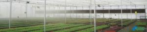 Control de la Humedad Relativa en los cultivos en Invernadero