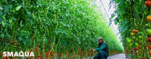 Nuevo Sistema para tratar Cultivos con OZONO. Puesto a prueba en 22 Hectáreas de Tomate bajo Invernadero