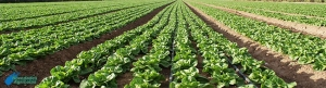 What are fertilizers and how to use for irrigation