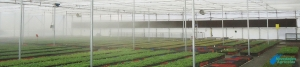 Relative humidity control on crops in greenhouses
