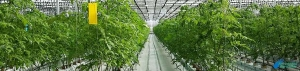 Niveles de Fertilización Carbónica en Invernaderos