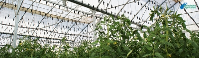 Recommendations for correct Trellising Plants: Handset Hangers