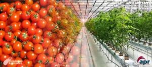 Cultivos en Invernadero: INVERNADERO PARA HORTALIZAS