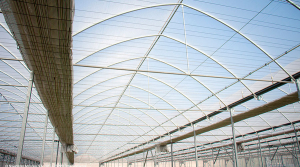 Multi-tunnel greenhouses, a good treatment in ecological