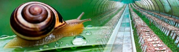 SNAIL GREENHOUSES. New business models in the Agricultural Sector