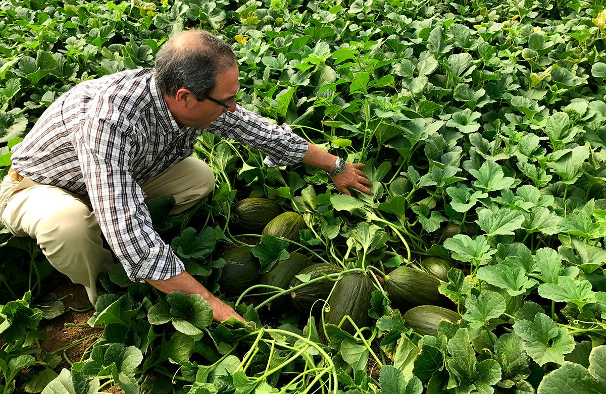 Sistema de Producción Melón Novedades Agricolas