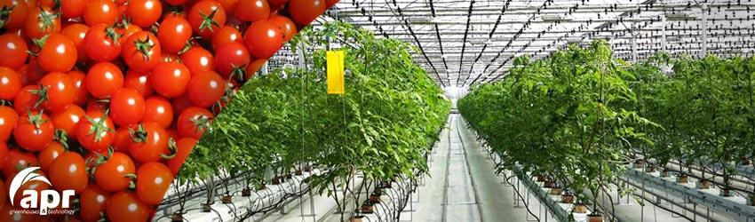 Vegetables Greenhouse Apr
