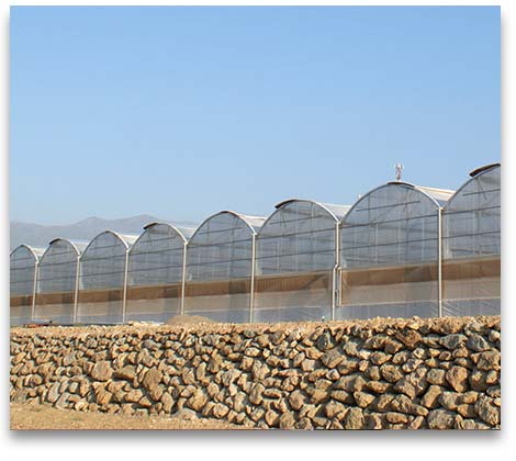 Sale And Construction Polytunnel Greenhouses In Spain