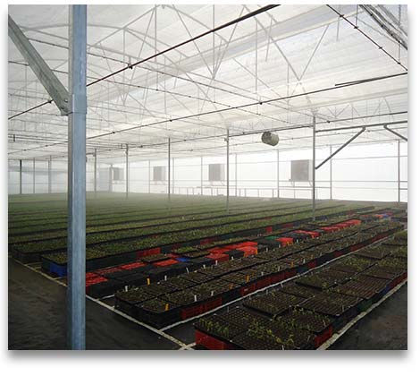 Sale And Construction Greenhouses For Strawberry And