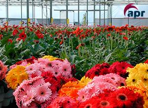 fotos de invernaderos de flores