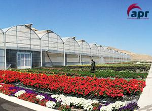 Invernaderos Por Cultivos Cultivo De Tomate Hortalizas