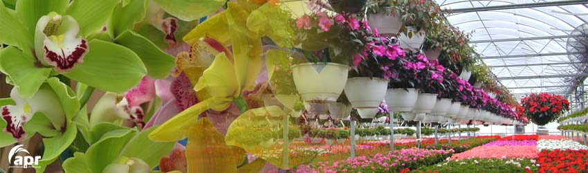 invernadero-orquideas