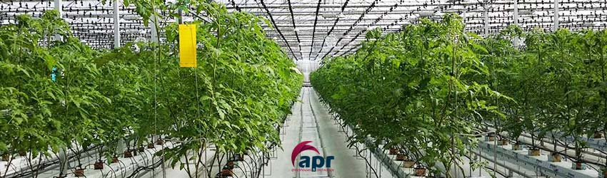 Invernaderos para cultivo de tomate for Plantas para invernadero