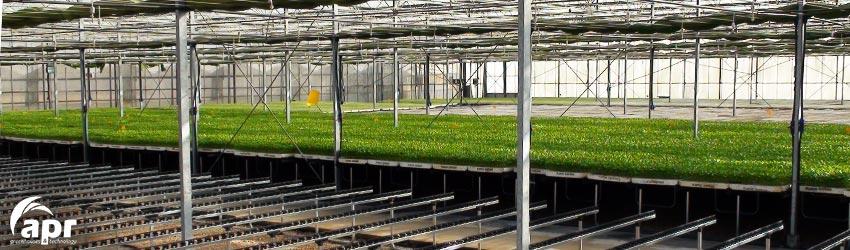 Invernaderos semilleros para producci n de semillas for Vivero estructura