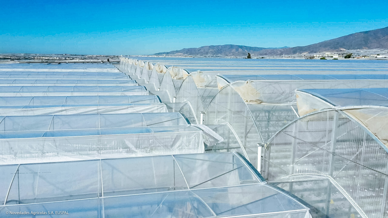 Luminous Multi-Tunnel Greenhouses for High Production | APR Lux