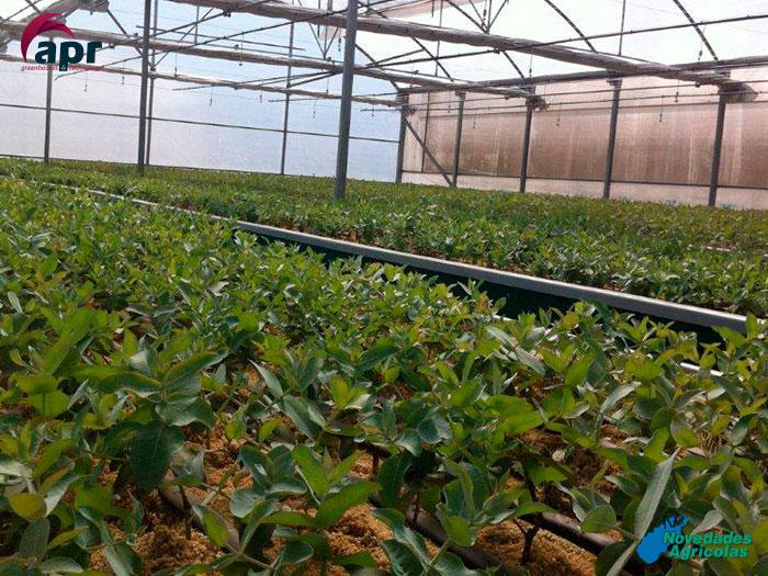 Construcci n de invernaderos viveros en chile for Materiales para un vivero