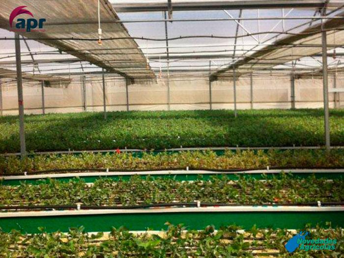 Construcci n de invernaderos viveros en chile for Plano de un vivero forestal