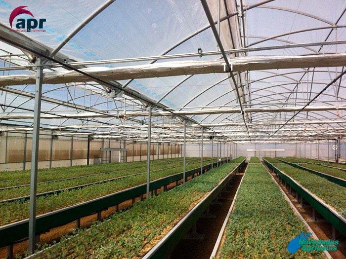Construcci n de invernaderos viveros en chile for Proyecto productivo de vivero forestal
