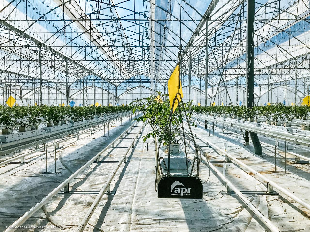 Nuevo Proyecto De Invernaderos Para El Cultivo Hidrop 243 Nico
