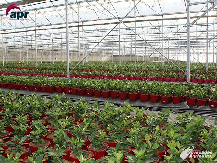 Construcci n de invernaderos multicapilla en vicar almeria for Proyecto vivero ornamental