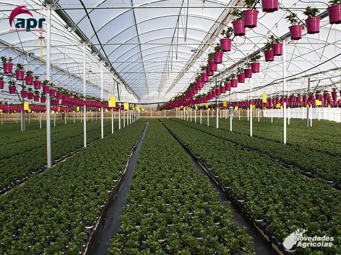 Construcci n de invernaderos de plantas ornamentales en for Viveros ornamentales