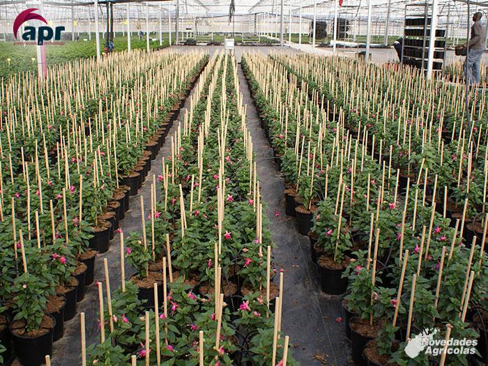 Construcci n de invernaderos de plantas ornamentales en for Modelo de proyecto de plantas ornamentales