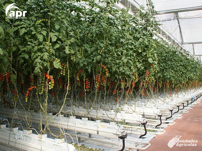 Construcci n de invernaderos para tomate en nijar almer a for Construccion de viveros