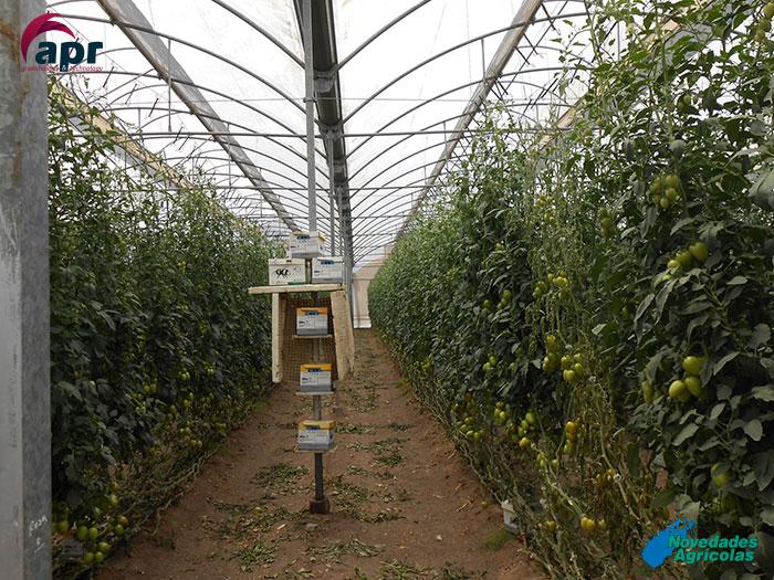Construcci n de invernaderos de tomate en sinaloa mexico for Construccion de viveros e invernaderos