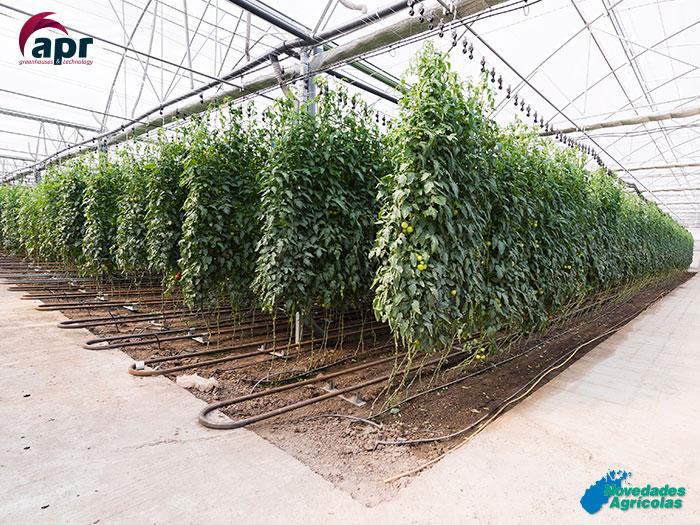 Invernaderos multitunel de tomate y pimiento en ruman a for Construccion de viveros