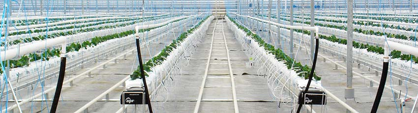 Hydroponic Farming | Irrigation System - Greenhouses - Culture