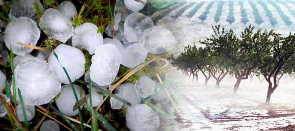 Consejos para soportar el granizo en cultivos al aire libre
