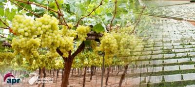 Cultivos en Invernadero: INVERNADEROS PARA FRUTALES