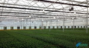 Advantages of greenhouse production