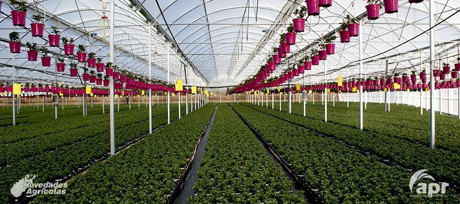 Invernaderos org nicos y ecol gicos la nueva tendencia en for Como establecer un vivero