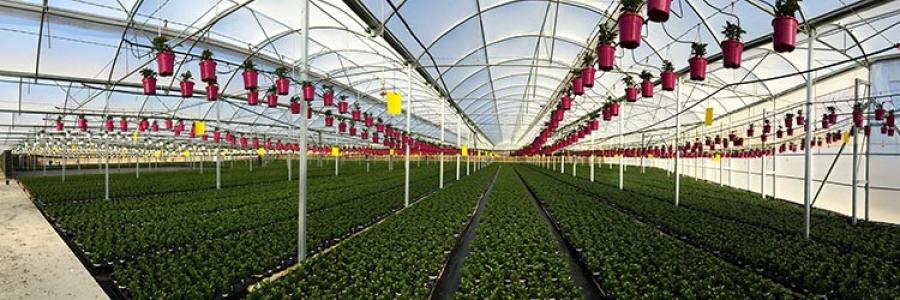 Novedades Agrícolas instala un invernadero para el Cultivo de Planta  Ornamental en Almería